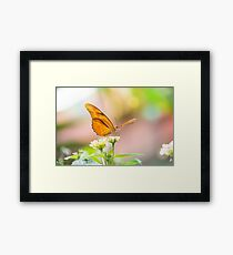 Butterfly - Julie Heliconian Framed Print