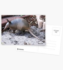 What's THIS in the Yard?  Helllloo, Armadillo!!   Postcards