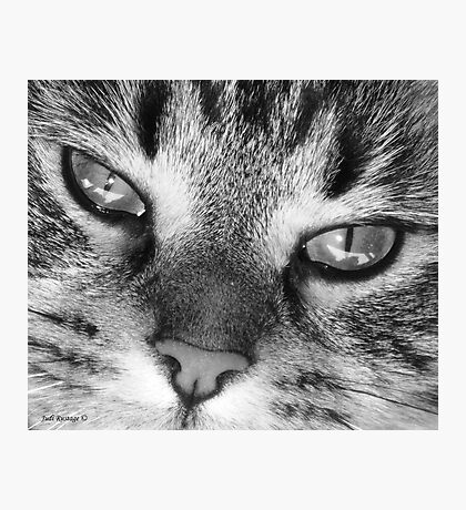 Look into my eyes.... you cannot resist me!! Photographic Print