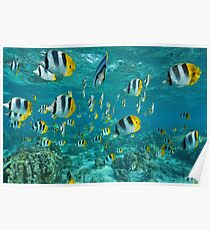 Tropical Fish Shoal Butterflyfish Poster