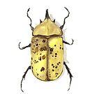 Dynastes Tityus (Eastern Hercules Beetle) by willeyworks