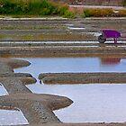 Marais Salants de Guérande - Salzwiesen von Guérande von Buckwhite