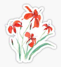 orange day lily Sticker