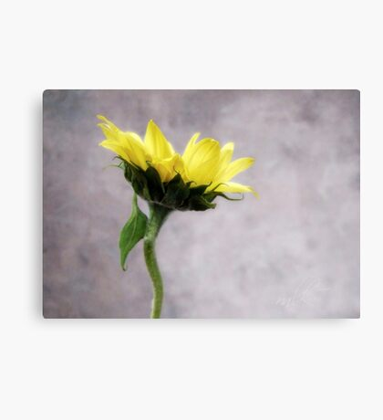 Sunflower #1 Canvas Print