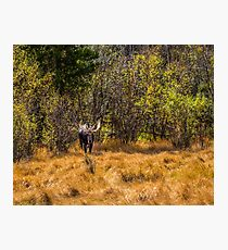 Bullwinkle Photographic Print