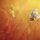 Catching a little sunshine... by Bob Daalder