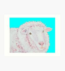 Merino sheep  Art Print