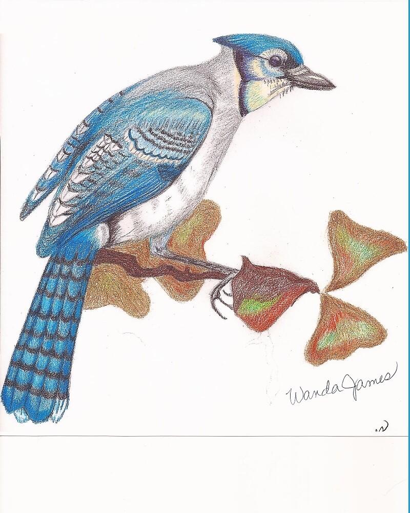 Blue Jay by Wanda Teston