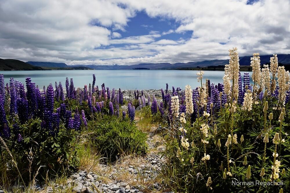 Pathway to lake Tekapo by Norman Repacholi