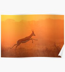 Springbok - Jumping for Gold - African Wildlife Poster