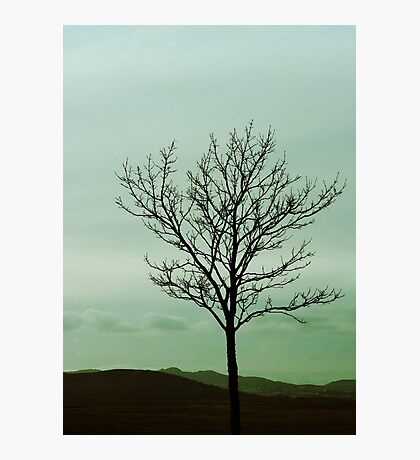 Just a little tree Photographic Print