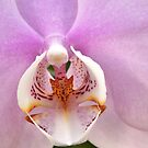 Orchid Patterns by photolodico