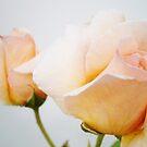 Pastel Roses by Judi Rustage