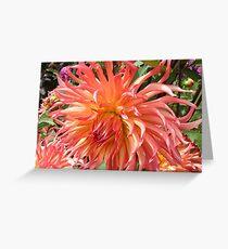 Peach-colored Dahlia Greeting Card