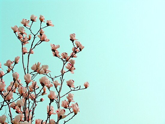 Spring by Dan Algina