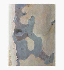 Australian design - Abstract Gum Tree Bark 1 Photographic Print