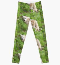 Arctic wolf feeding pups Leggings