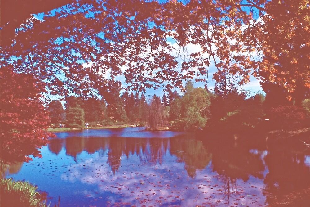 Lake in Autumn, Vancouver BC by Priscilla Turner