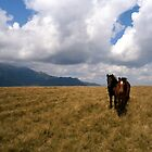 Wild horses and ominous clouds by crystalline