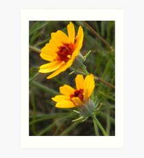 Coreopsis at First Rays of Morning Art Print