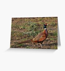 Pheasant in the English countryside Greeting Card