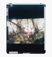 Through the viewfinder - winter blossoms iPad Case/Skin