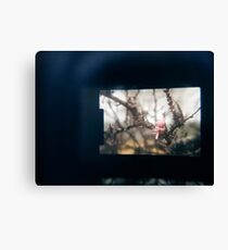 Through the viewfinder - winter blossoms Canvas Print