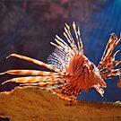 Lionfish by Savannah Gibbs