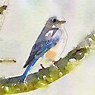 Mr. Bluebird by Caren