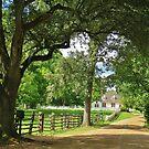 Colonial Williamsburg, Virginia by Alberto  DeJesus