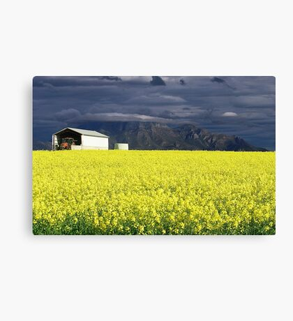 Sunshine After the Storm Canvas Print