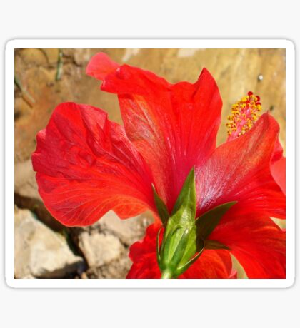 Back Of A Red Hibiscus Flower Against Stone Sticker