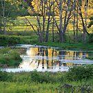 Meadow Wetlands by Geno Rugh