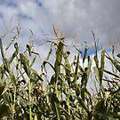 Corny Sky Full by photolodico