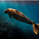 Pango Dugong by Peter Carroll