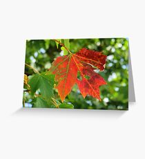 First sign of Autumn Greeting Card