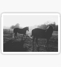 Two horses Sticker