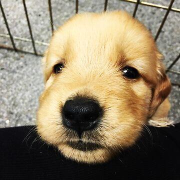I'm So Cute by banncrawford