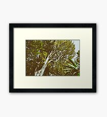 Green Tree Foliage In Summer Framed Print