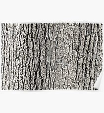 Tree Bark Background Texture Poster
