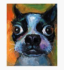 Cute Boston Terrier puppy dog portrait by Svetlana Novikova Photographic Print