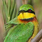 Little Bee-eater by jozi1
