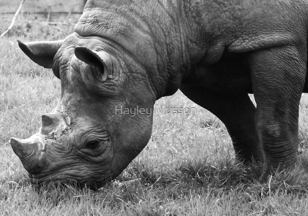 Rhino by Hayley Musson