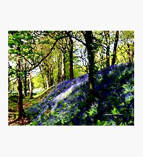 Bank of Bluebells Photographic Print