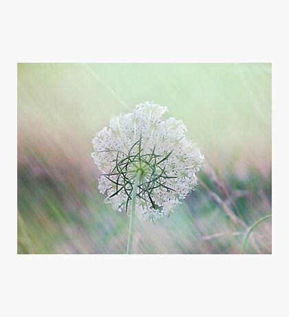 Beautiful from behind Photographic Print