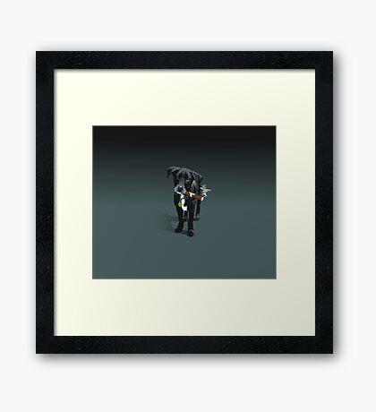 Dorrigo Framed Print