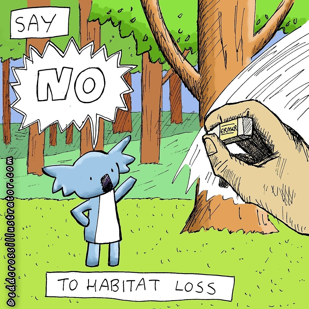 Koala Says No to Habitat Loss by eddcross