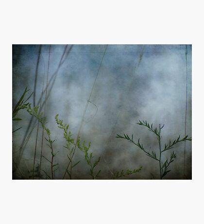 wild grasses 11 Photographic Print