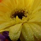 Yellow flower by Jasna Bogdan