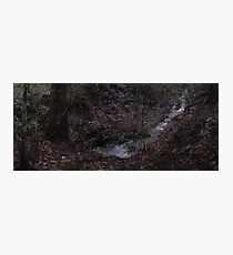 Zone 20: Forest Gateway Protected Forest Habitat:  Pic 10 of 13 - River Photographic Print